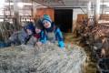 Erlebnis im Kuhstall