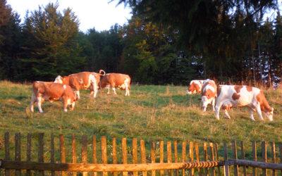 Die Samerberger Almwiesen – eine gesunde Umgebung für Mensch und Tier